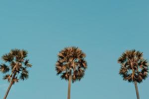 coqueiros tropicais no pôr do sol no clarão do céu e na natureza bokeh