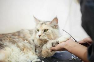 mulher segurando o pé de um gato enquanto aparava o cabelo