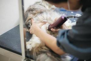 mulher cortando o cabelo de um gato na mesa