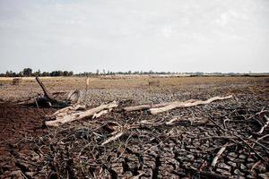 chão seco rachado e madeiras