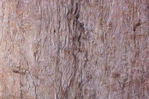 casca marrom ou madeira para fundo ou textura foto