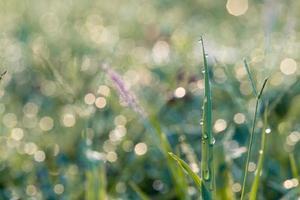 macro close-up de folhas de grama
