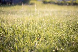 close-up de um gramado verde úmido pela manhã