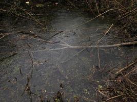 chuva caindo em uma poça da floresta foto