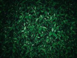 arbustos verdes e arbustos foto