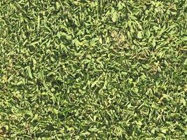 remendo de gramado ou grama para plano de fundo ou textura foto