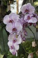 planta de orquídea no jardim foto