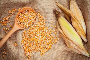 milho e cascas de milho foto