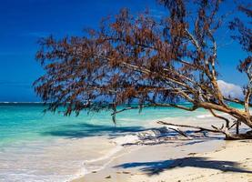 praia tropical no mar do caribe foto