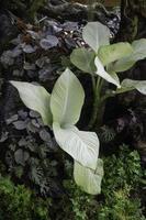 plantas ornamentais no jardim foto