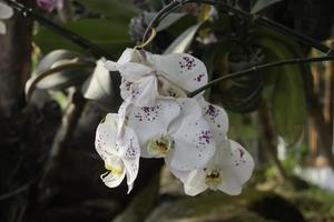 orquídeas no jardim foto