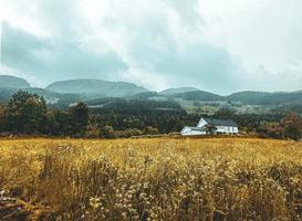belo prado norueguês abaixo de uma floresta