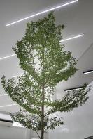 árvore interna da sala iluminada foto