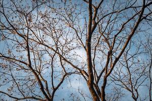 galho de árvore no céu azul de inverno
