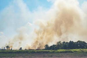 fogo queimando em um arrozal