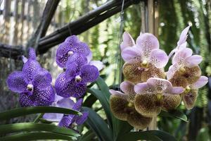 orquídeas em cestos suspensos