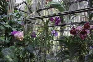 orquídeas em uma casa verde
