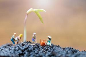 jardineiros em miniatura cuidando do cultivo de brotos em um campo, conceito de ambiente foto