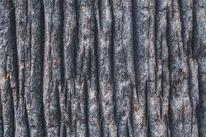 textura da casca de uma palmeira-leque da califórnia foto