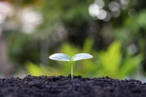 pequenas árvores com folhas verdes, crescimento natural e luz solar foto