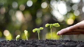as mãos de quem rega pequenas plantas e o conceito de cuidado ambiental