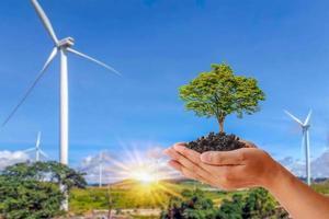 uma pequena árvore que cresce nas mãos de pessoas em um contexto de turbinas eólicas