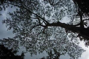 sob a sombra de uma grande árvore foto