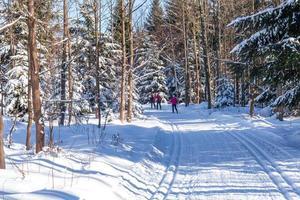 esqui cross-country na floresta na neve no inverno