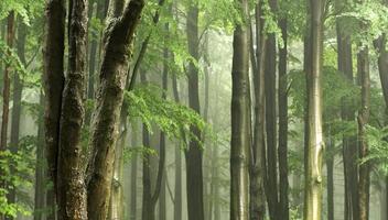 árvore de folhas largas em um plano de floresta com luz decente e neblina