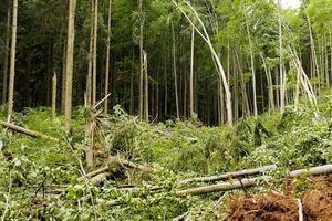 árvores de folhas largas após greve de tempestade de vento