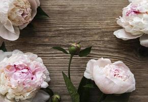 flores de peônia rosa como borda foto