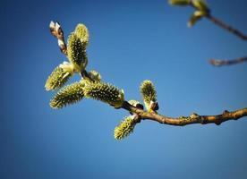 flores da primavera em galhos de árvores