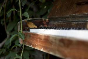 folha marrom nas teclas de um piano em um jardim