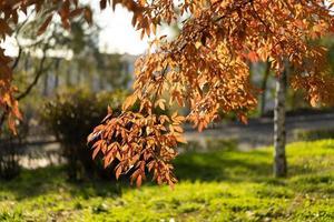 folhas vermelhas e laranjas em um galho em um parque como plano de fundo ou papel de parede