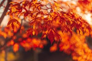 folhas vermelhas e laranja em um galho para plano de fundo ou papel de parede