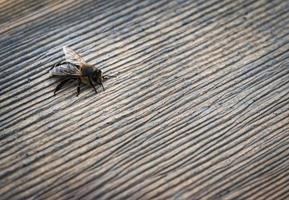 abelha na madeira