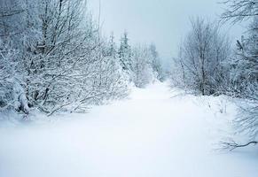 caminho na floresta sob a neve