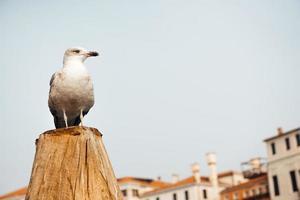 um pássaro gaivota pousado em um tronco tendo como pano de fundo as casas venezianas