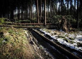 floresta depois de um vento forte