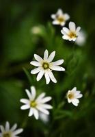 flores brancas em um fundo verde escuro
