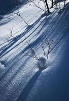 longas sombras na neve foto