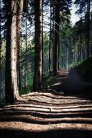longas sombras em um caminho na floresta