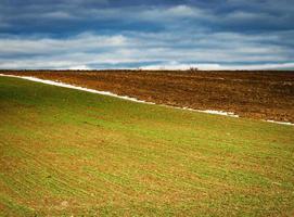 campo minimalista na primavera