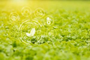 crescimento vegetal hidropônico foto