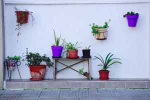 vasos de flores na rua foto