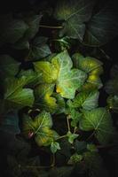 folhas de plantas verdes em um jardim na primavera