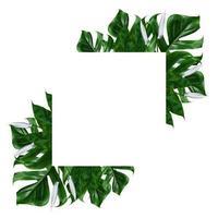 moldura de folha verde tropical em um fundo branco foto
