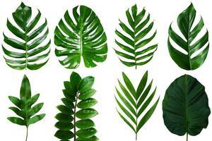 folhas de palmeira tropical em um fundo branco foto