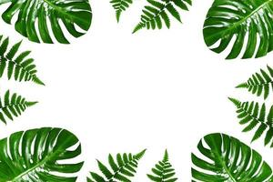 quadro de folhas de palmeira tropical em um fundo branco foto