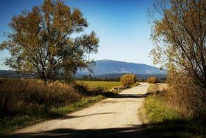 caminho em um campo